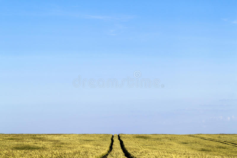 Grusvägbana i ett landskap för vetefält i sommar arkivbilder