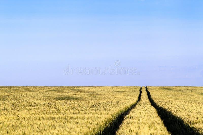 Grusvägbana i ett landskap för vetefält i sommar royaltyfri foto
