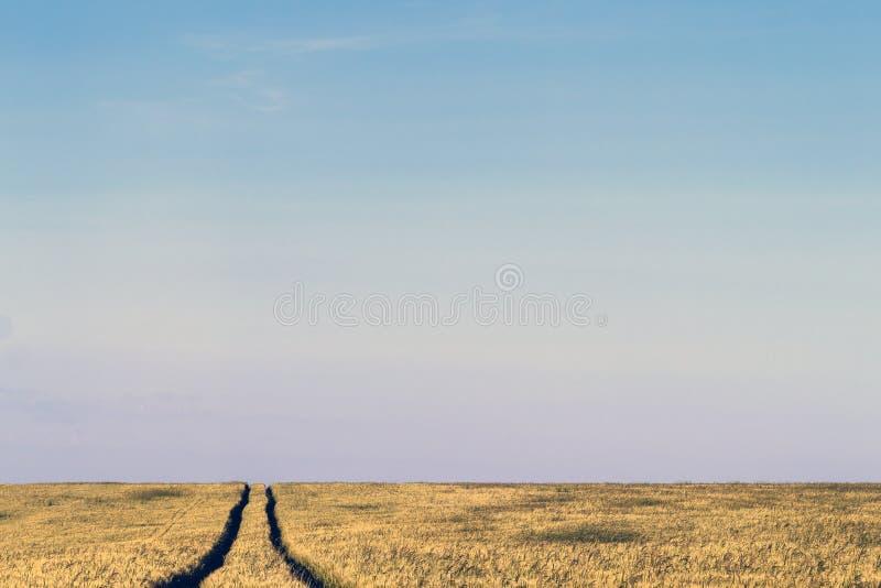 Grusvägbana i ett landskap för vetefält i sommar royaltyfria foton