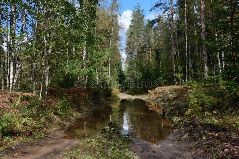 Grusvägen i skogen med en stor pöl fotografering för bildbyråer