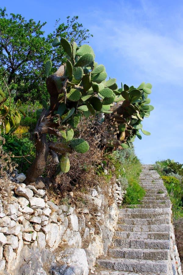 gruszka kłujący schody obrazy royalty free