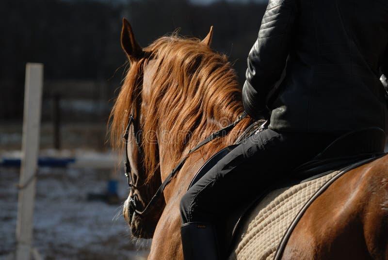 Grutten van een paard royalty-vrije stock foto