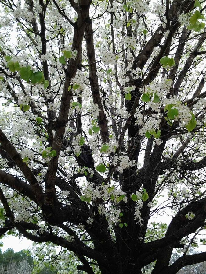 Gruzja wiosna obraz stock