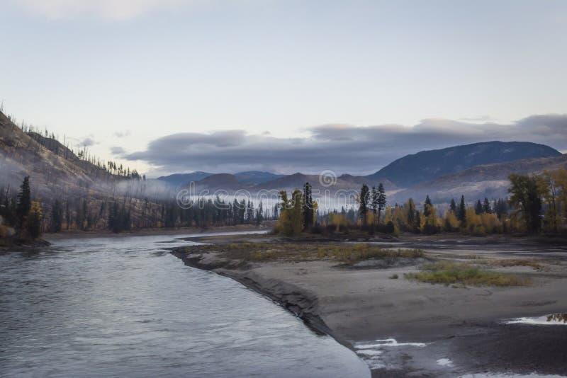 Gry blicken på skogen i British Columbia, Kanada fotografering för bildbyråer