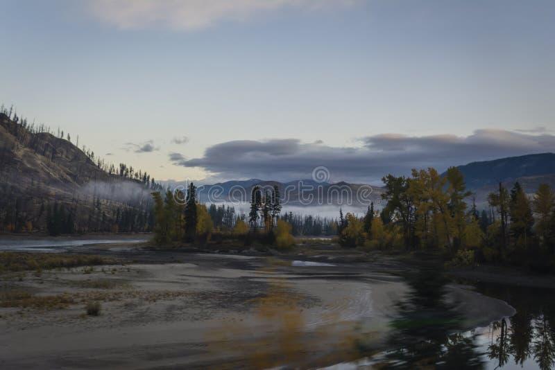 Gry blicken på skogen i British Columbia, Kanada arkivbild