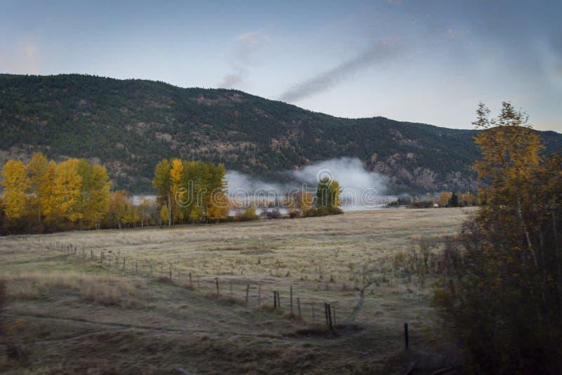 Gry blicken på skogen i British Columbia, Kanada royaltyfri fotografi