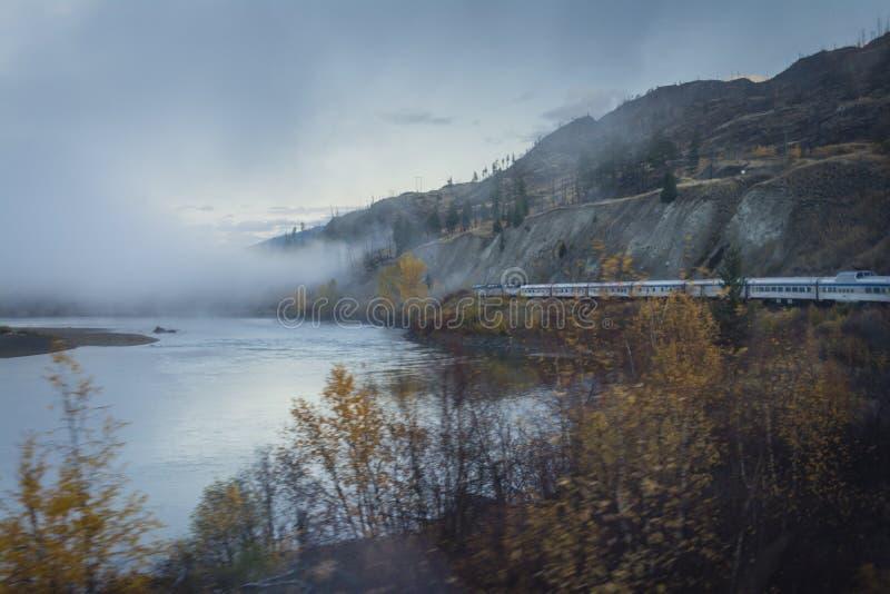 Gry blicken på skogen i British Columbia, Kanada arkivbilder