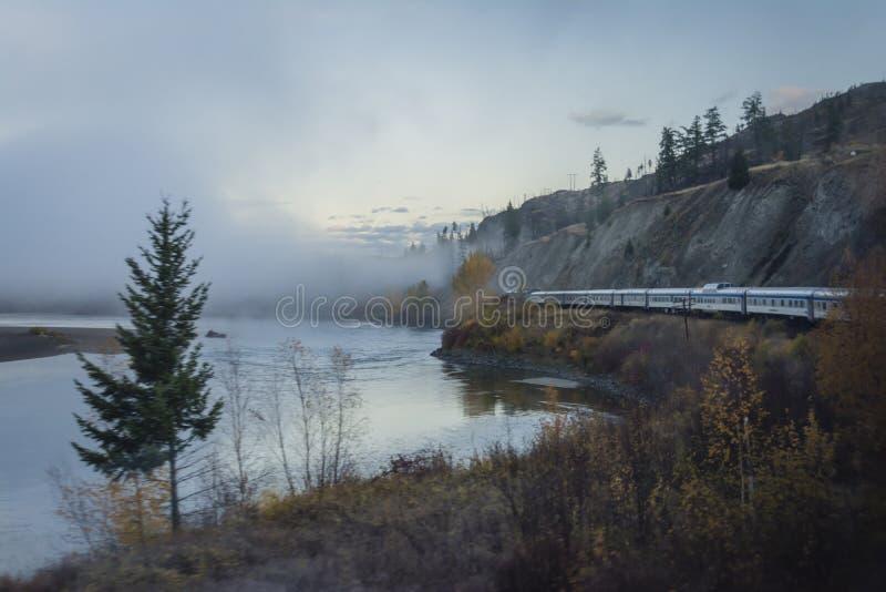 Gry blicken på skogen i British Columbia, Kanada royaltyfria bilder