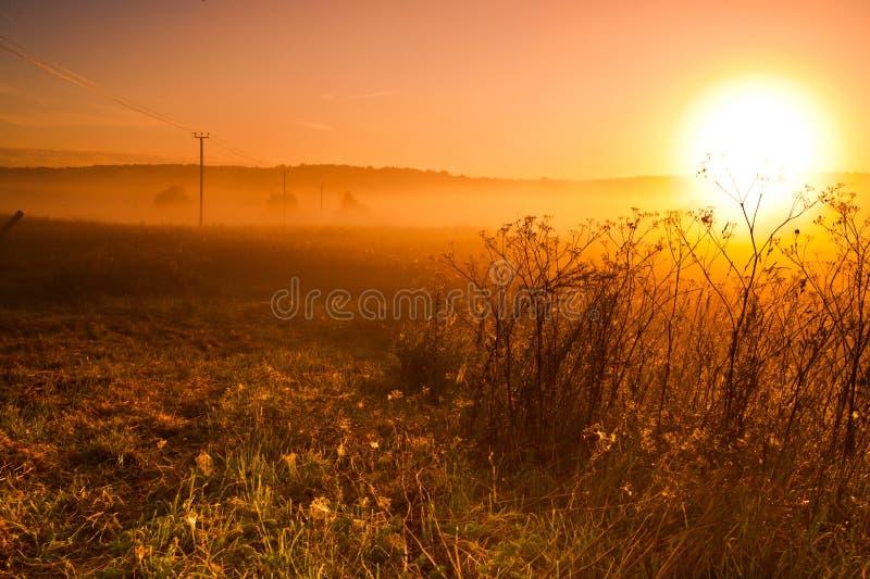 Gry de varma sollöneförhöjningarna över fältet, kraftledning arkivbilder