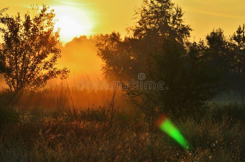 Gry i träna, häller solen ängen arkivbilder