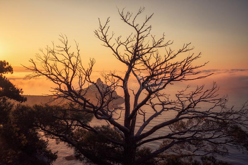 Gry nära byNovyi Svit det nya ljuset fotografering för bildbyråer