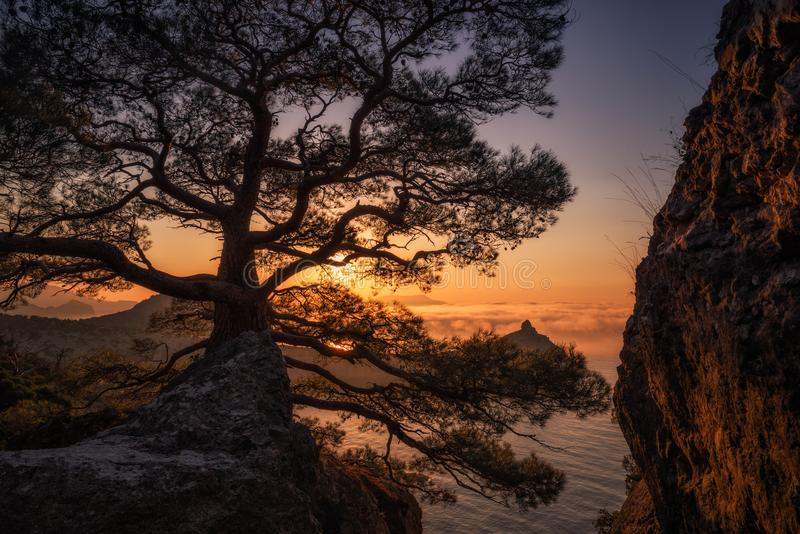 Gry nära byNovyi Svit det nya ljuset arkivfoton