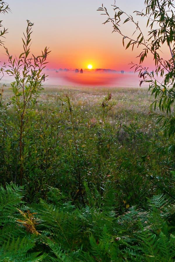 Gry på en grön äng med gräs som täckas med små droppar av dagg Morgonogenomskinlighet och solresningen från horisonten i royaltyfri fotografi