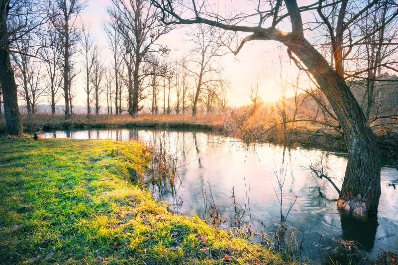 Gry på floden med gräs på kust arkivfoto