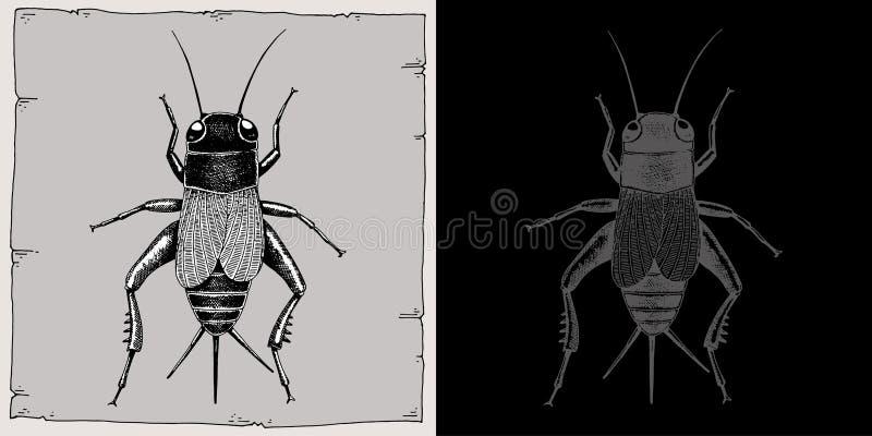 Gryllidae photos stock