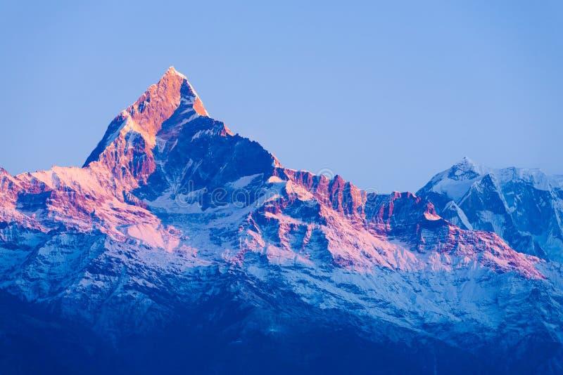 Gryning för soluppgång för glöd för Machapuchare bergmaximum röd royaltyfri fotografi