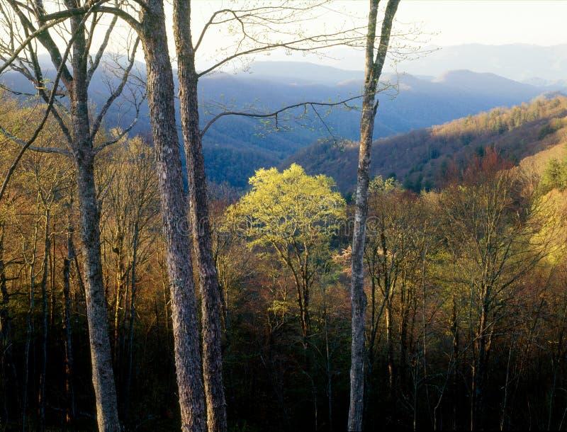 Gryning i den Cherokee nationalskogen, Great Smoky Mountains nationalpark, North Carolina royaltyfria bilder