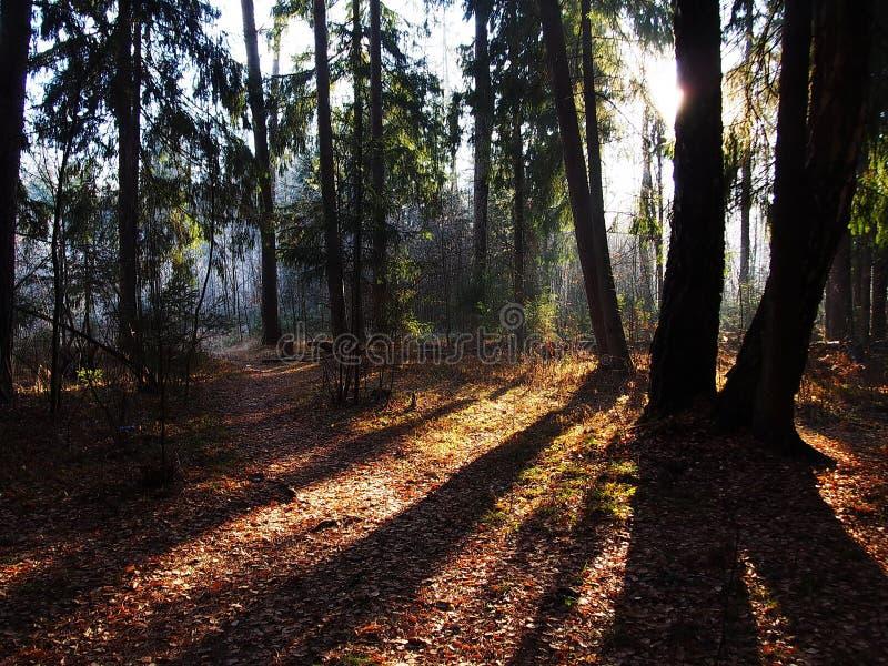 Gryning i h?rlig natur f?r h?stskog exponeras av solljus Detaljer och n?rbild royaltyfria bilder