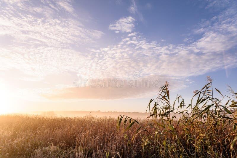 Gryning ?ver floden p? en sommarmorgon, dimma ?ver f?ltet, gr?s med rimfrost royaltyfria bilder