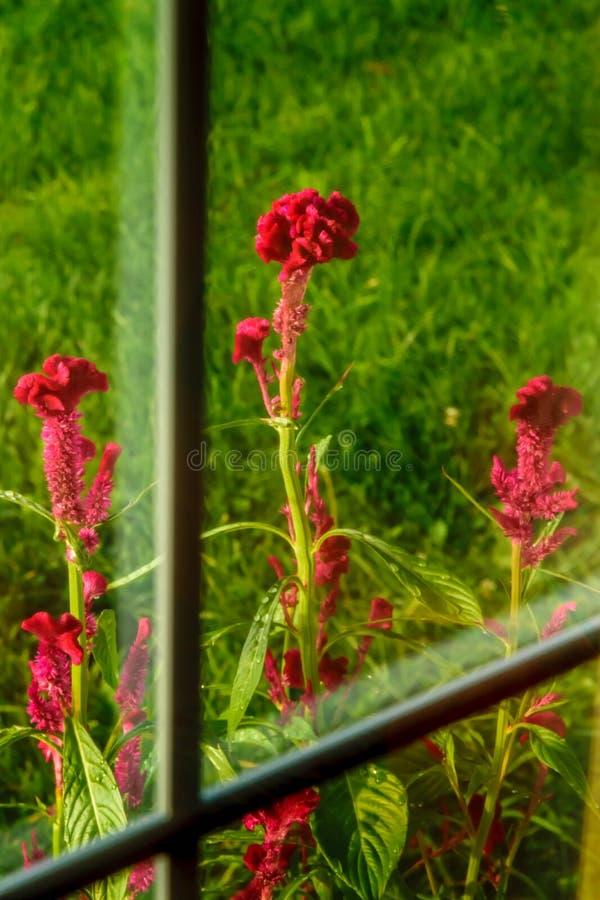 Grzebionatka Przez okno zdjęcie royalty free