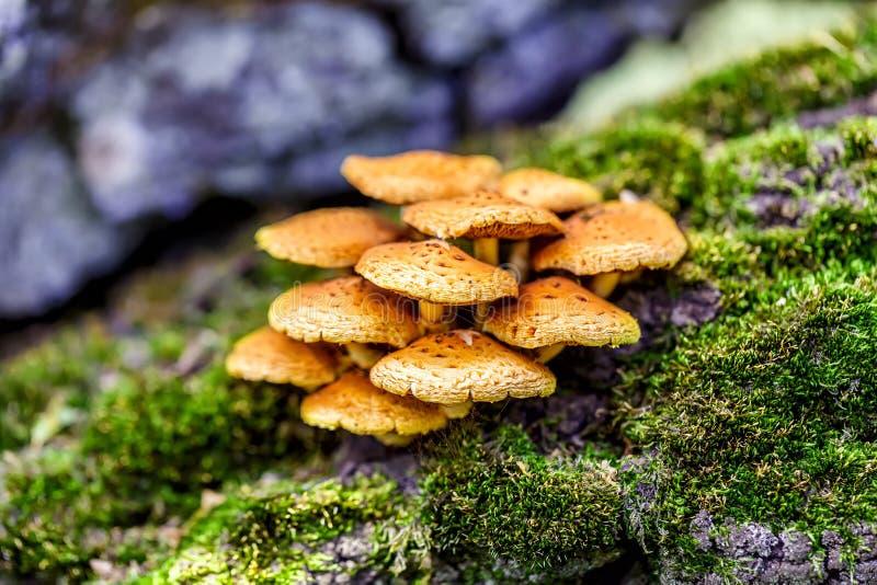 grzyb zdjęcie stock