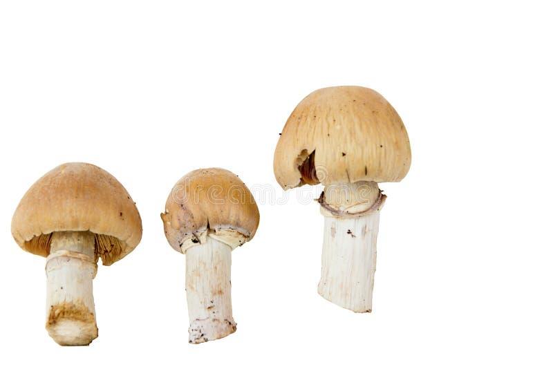 grzyb obrazy stock