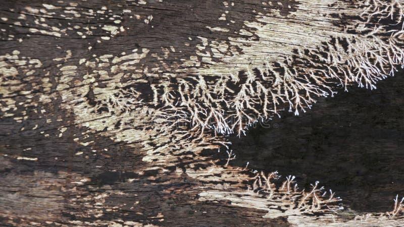 grzyb drewna zdjęcie royalty free
