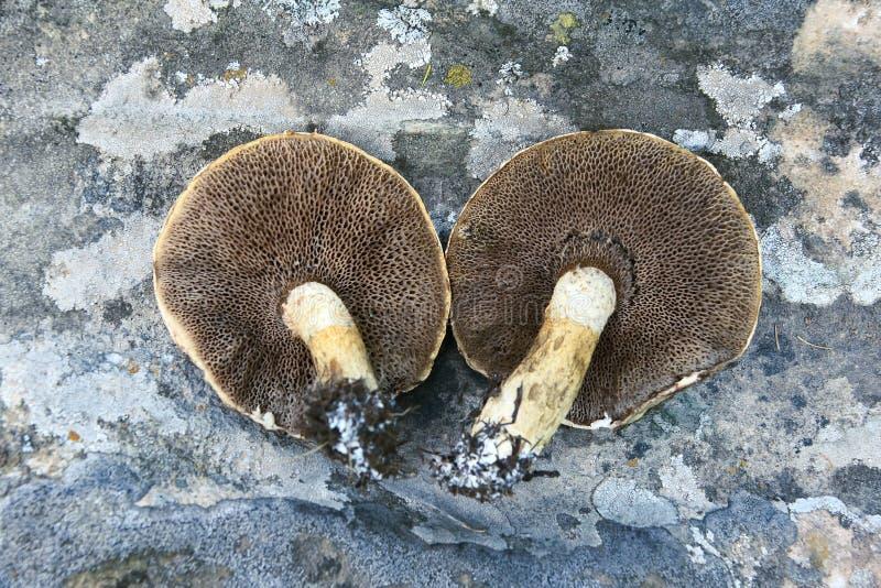 grzyb dziki zdjęcie stock