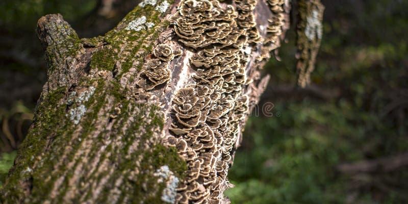 Grzyb i algi na barkentynie drzewo fotografia royalty free