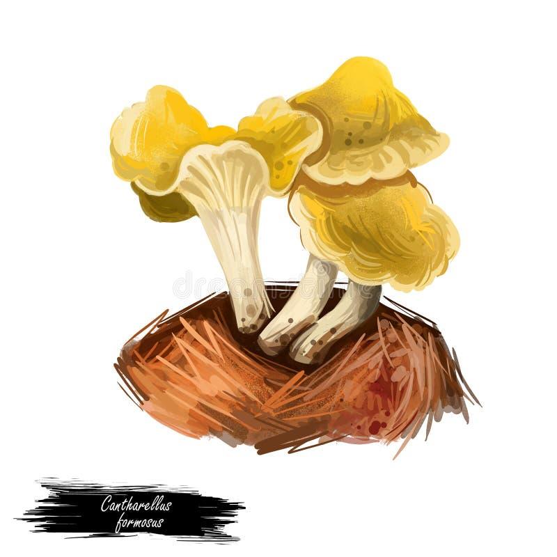 Grzyb jadalny Cantharellus formosus lub pacyficzny grzyb złocisty, izolowany na białym. Cyfrowa ilustracja sztuki, naturalna ilustracja wektor