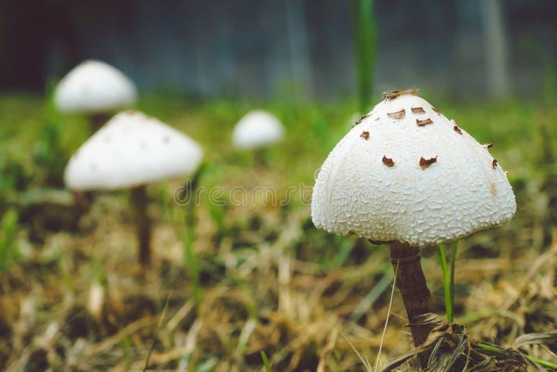 Grzyb na polu trawy z liśćmi , skupione na punktach ,widok zamknięcia ,Grzyby naturalne obraz stock