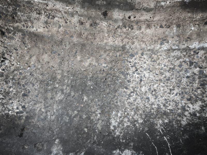 Grzyb na starych betonowych ścianach obraz royalty free