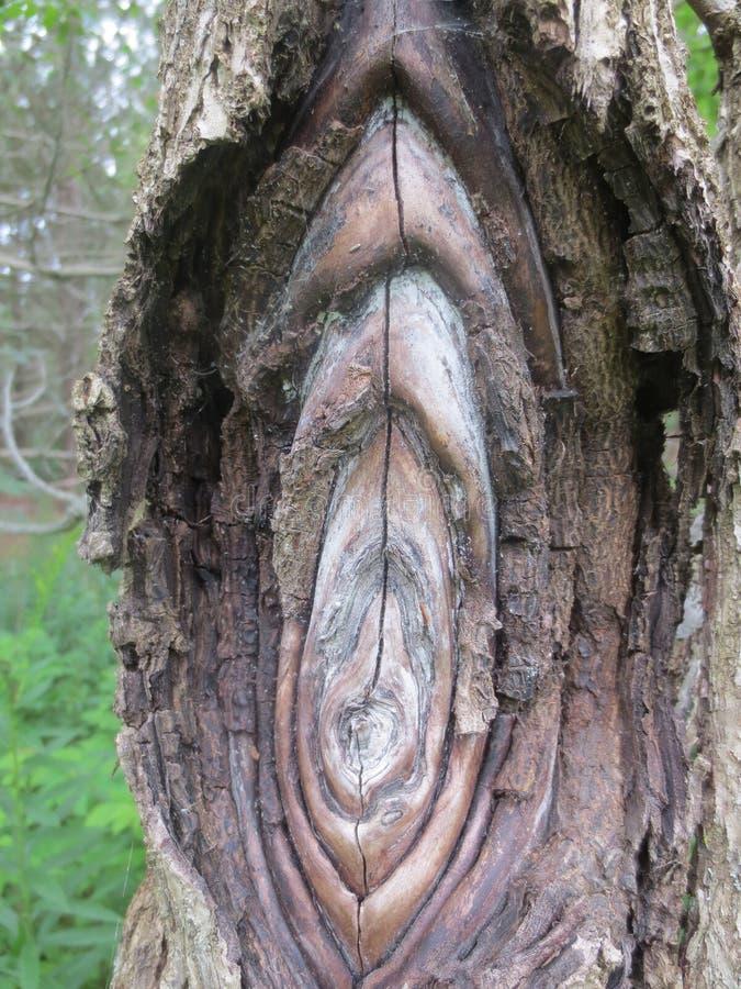 Grzyb Tworzy Płatowate kępki w drzewie zdjęcie stock