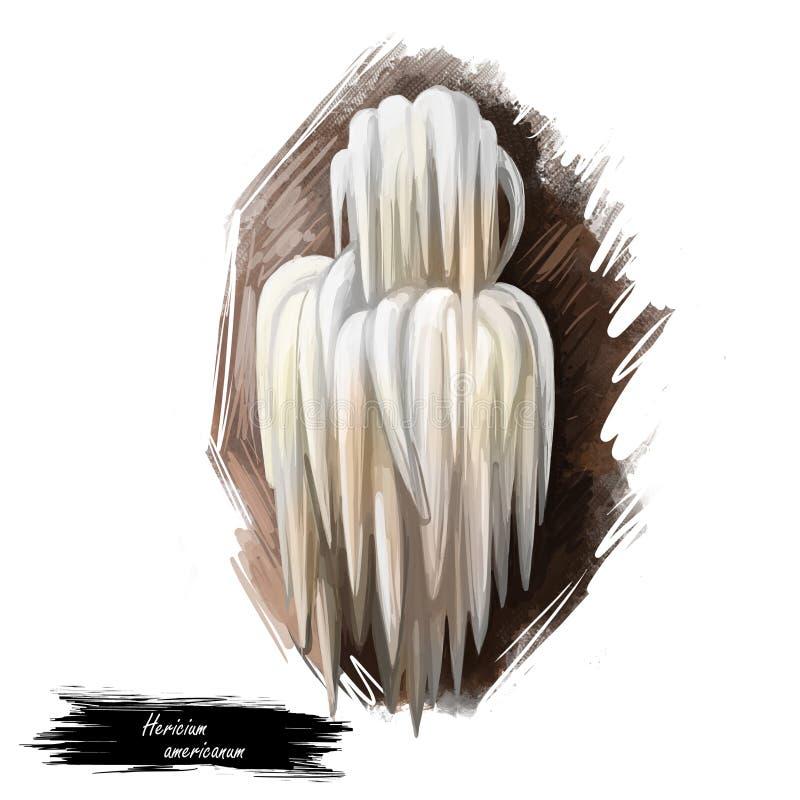 Grzyb zębowy niedźwiedzia Hericium americanum, jadalny grzyb w grupie grzybów zębowych izolowany na białym. ilustracja sztuki royalty ilustracja