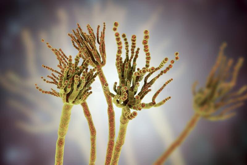 Grzyba Penicillium roqueforti ilustracja wektor