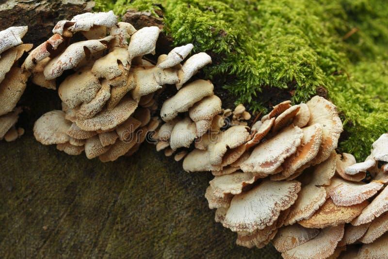 grzybowy drzewo obraz stock