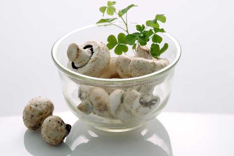 grzyby obrazy stock