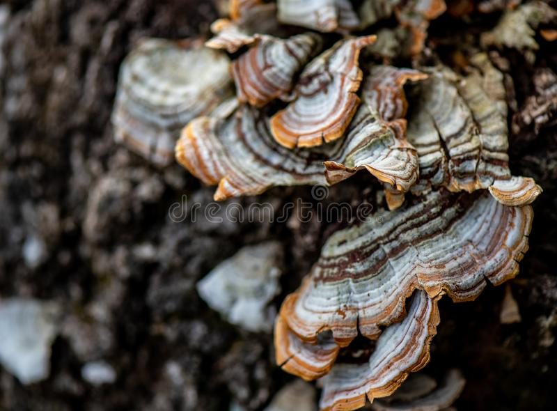 Grzyby w lesie obraz stock