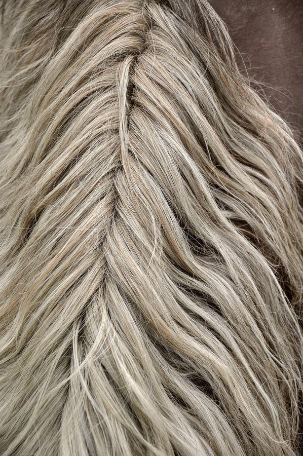 Grzywa włosy końskie pięknie coiffed fala obraz royalty free