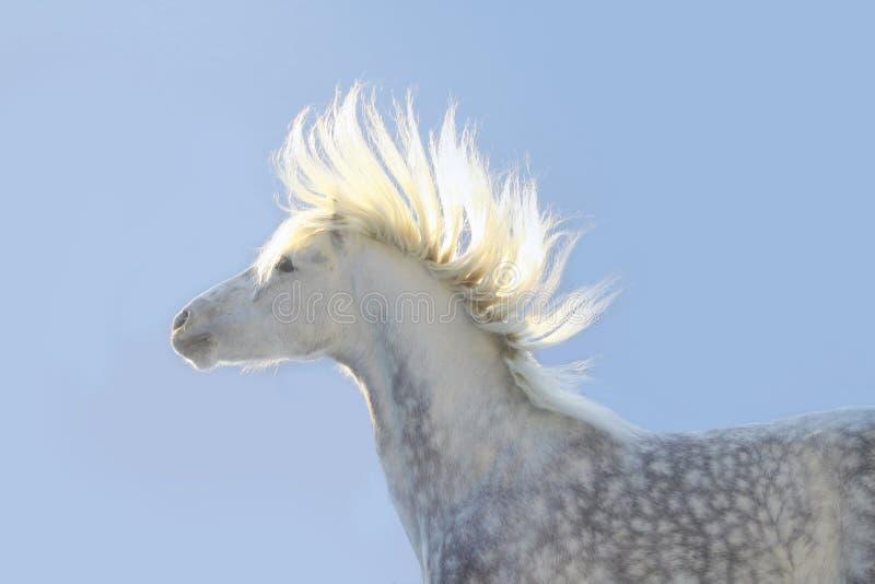 grzywy koński słońce obraz stock