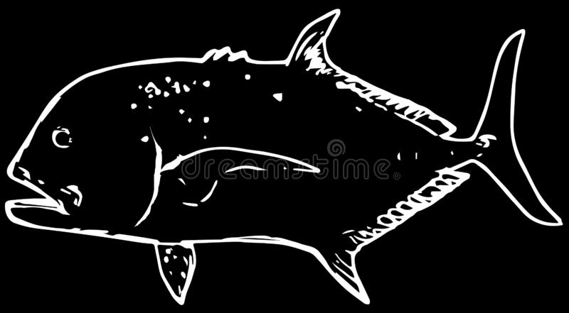 GT giant trevally fish predator on black background. Giant trevally is distinguished by its steep head profile, strong tail scutes, and a variety of other more royalty free illustration