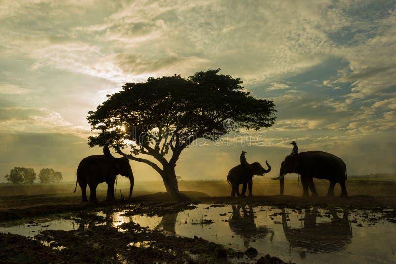 Gther do elefante e do mahout sob a árvore grande fotos de stock