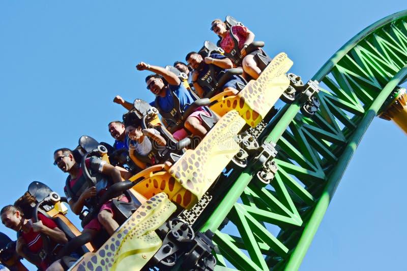 Guépard fantastique Hunt Roller Coaster aux jardins Tampa Bay de Bush photos libres de droits
