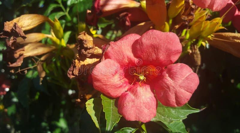 Guêpe sur la fleur image libre de droits