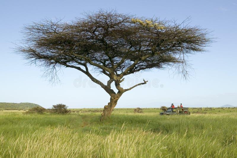 Guías del safari del Masai en el vehículo de Landcruiser debajo de un árbol en la conservación de la fauna de Lewa, Kenia del nor fotografía de archivo