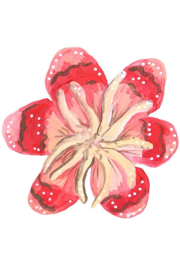 Guache mexicano vermelho da flor ilustração royalty free