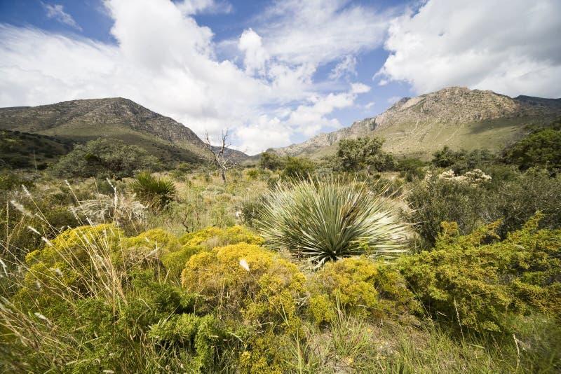 guadalupe berg arkivbild