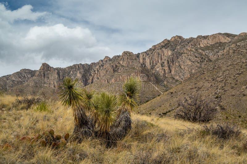 Guadalupe Mountains Texas imagen de archivo