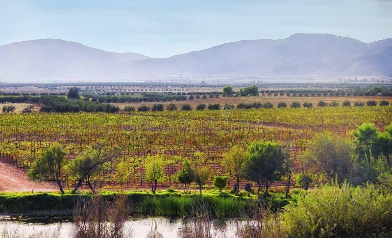 Guadalupe Valley, país vinícola, Baja, México foto de archivo