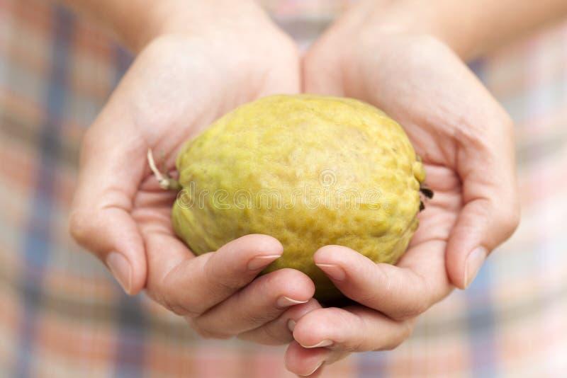Guajava-Frucht in den Händen der Frau lizenzfreie stockbilder